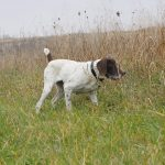 Five Tips for Effective Flea and Tick Management