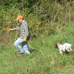 POINTING DOG POINTERS: Starting the Pointing Dog Pup – Handling in the Field