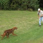 POINTING DOG POINTERS: Starting the Pointing Dog Pup – Yard Work