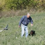 POINTING DOG POINTERS: Problems in Developing the Started Dog – Gun Nervous / Gun Shy
